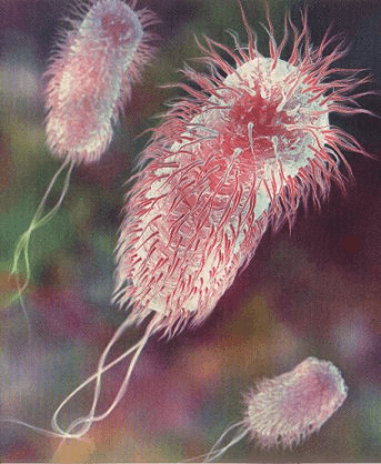 Увеличенное фото кишечной палочки, которая может находиться в воде из скважины