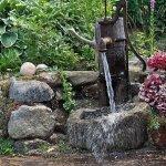 В диком саду