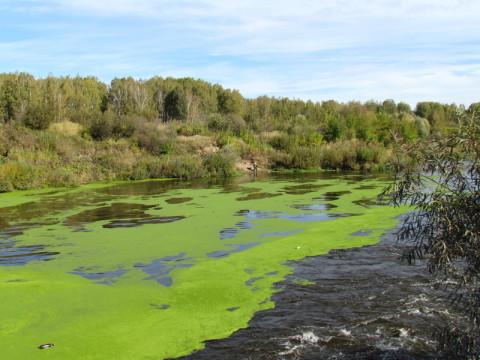 Состояние источников питьевого водоснабжения может ухудшаться из-за интенсивного развития фитопланктона